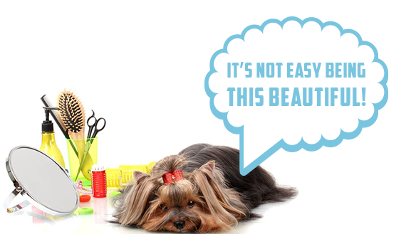 Dog Grooming Weymouth